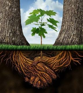 Fundament - Foundation Leven Laten Leven - Let Life Live
